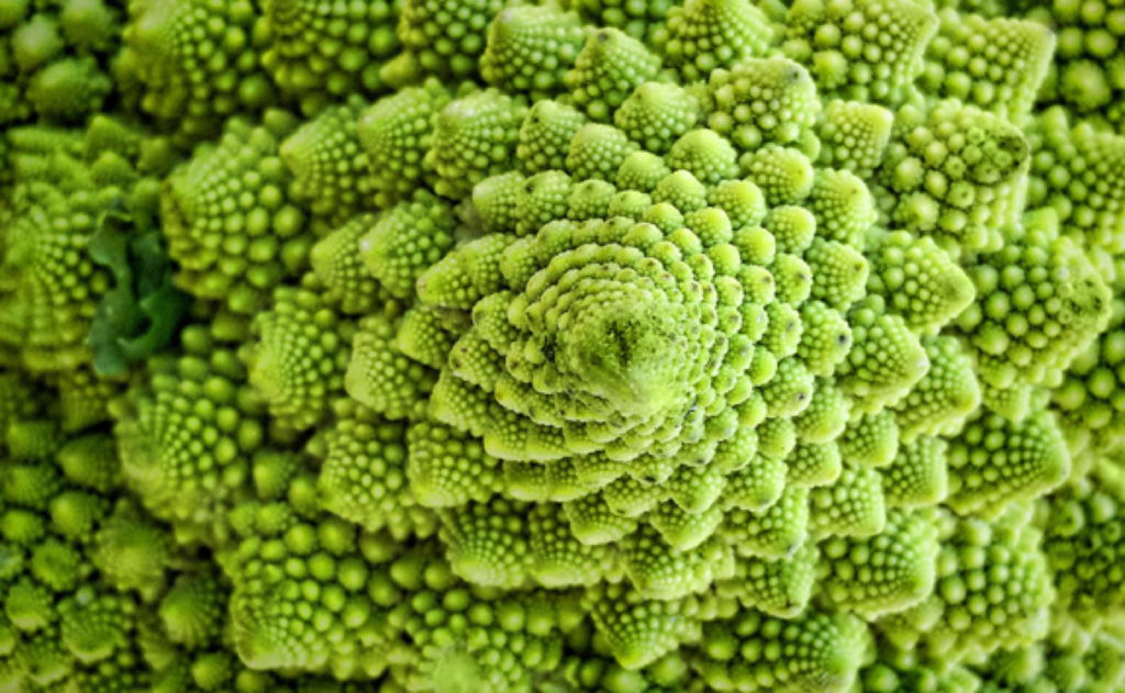 Fractal in Nature